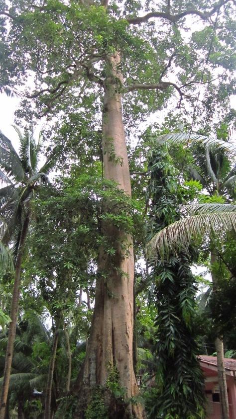 Dita Heritage Tree